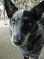 Communication non verbale entre l'homme et le chien