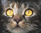 Pixabay/katinkavomwolfenmond