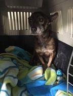 Der gerettete Hundeopa