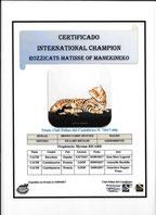 champion international wcf male bengal