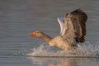 Weitere Vogelarten