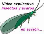 video insectos beneficiosos