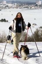 EC Chiens décrit les activités sportives à pratiquer avec son chien comme le cani-vtt cani-bike cani-cross cani-rando. Sur la photo une balade en raquettes avec son chien pour une balade dans la neige avec un chien. education pour chien est conseillée