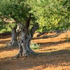 """Naturlandschaften durch das """"in Holz Investieren"""" schützen"""
