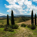 Hügel in der Toskana mit vier Zypressen im Vordergrund