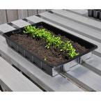 microgroenten kweken, zaaibak, kweekbak