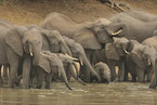 definition big five elephant