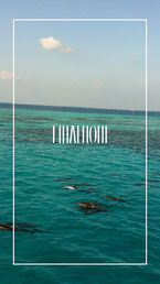 malediven-delfine