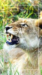 sabi-sand-safari