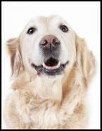 Hundefutter und Zubehör