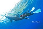 バハマ,御蔵島,利島,東伊豆のドルフィンスイムスクール,イルカツアーで出会った野生イルカ