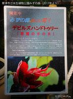 草津市立水生植物公園みずの森の説明(2017年初夏より)