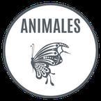retovinilo, vinilos decorativos, vinilos, pegatinas, decoración de paredes, animales, pájaros, leones, gatos, mariposas, fauna, savajes
