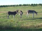 Gîte avec des ânes