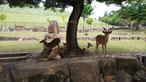 泊った筈の旅館前の鹿たち