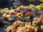 イソギンチャクと魚の共存