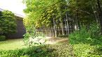 忍城址公園には竹林も