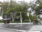松本神社の山門脇の巨木