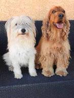 BRODERIE DIAMANT personnalisé chiens