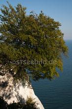 Kreidefelsen Nationalpark Jasmund
