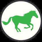 Neustadt Dosse Dreetz Kurse Reitunterricht Unterricht Klaudia Duif Parelli Horsemanship Equibalance Reiten Dressur