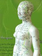 Weibliche Figur mit Meridianen und Akupunkturpunkten