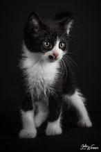 """Omalley : Célèbre chat du dessin animé """"Les Aristochats""""."""