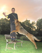 educ' da gi - éducation canine