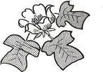 ゆりの木だよりより活動会員の声 ユリノキの花と葉