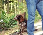 """""""Jagd ohne Hund ist Schund"""" – auch das haben wir gelernt."""