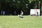 GOOD DOGS Hundeschule - Heusenstamm - Rodgau - Obertshausen - Erziehung - Hund