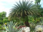 den Garten