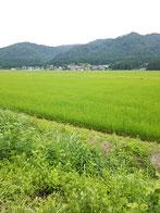 古川館 新潟
