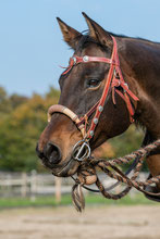 Trainer Pferd Horsemanship lernen, pferdegestütztes Coaching Burnoutprävention Stressbewältigung reiten lernen