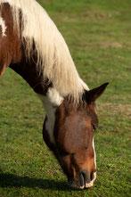 Pferd Rehedyk Horsemanship, pferdegestütztes Coaching Burnoutprävention Stressbewältigung reiten lernen