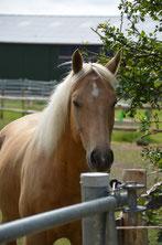 Trainer Pferd Rehedyk Horsemanship, pferdegestütztes Coaching Burnoutprävention Stressbewältigung reiten lernen