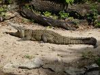 In der Laguna de Catemaco gibt es Krokodile - aber die machen nix, sagt man uns.  Ok, wir gehen trotzdem nicht baden!