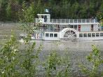 Am Yukon schippern Raddampfer...