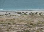 Am Playa el Tecolote........ - auch so fühlen wir uns sicher!