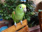 Das Haustier im Mamallena ist ein frecher Papagei, der Besteck, Bierdosen.... einfach alles klaut.