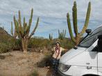 """Auf der """"Bacha"""" ist alles Kaktus - ..."""