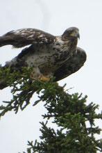 Abflug für den Adler...