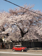 ruichinさん:宮城県仙台市