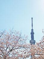 タケさん:台東区隅田公園(3/31)