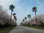 品川区東八潮(お台場) 潮風公園・tyanmaruとお友達さん