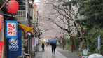 tyanmaruさん:中山法華経寺の味のある参道