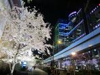 tyanmaruさん:東京都港区・お台場
