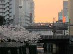 tyanmaruとお友達さん:東京都港区・青山墓地