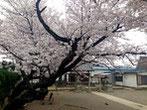 b'さん:川越市六軒町・六冢社(3/30)
