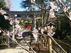 gさん:東京都江東区・七渡神社(3/31)